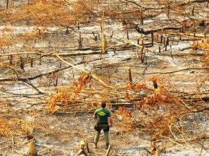 area-destruida-pelo-fogo-no-sudoeste-do-para_op-hefesto-_ibama-divulgacao